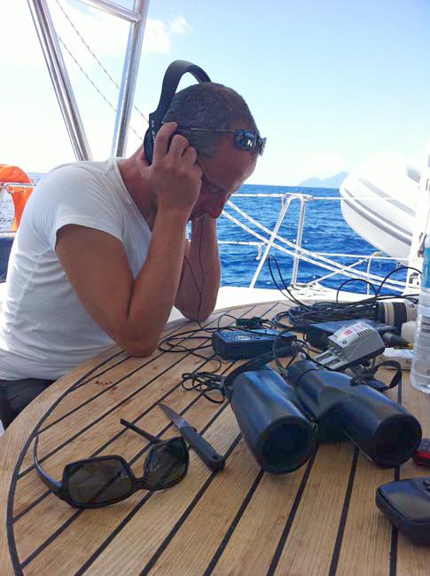 Suivi des mammifères marins : les observations sont visuelles... et acoustiques