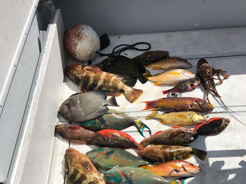 Les poissons saisis - The fish seized