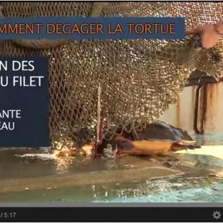 Protocole tortue capturée par engin de pêche
