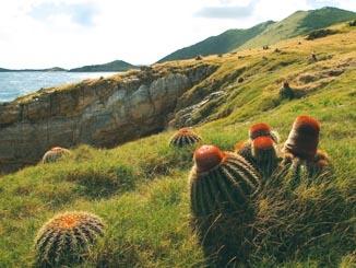 Nature Reserve Newsletter # 17 - 2013