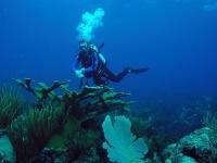 Suivi scientifique en plongée