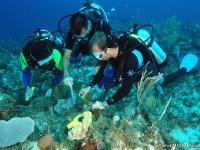 Suivi de l'état de santé des coraux
