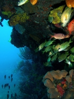 Paysage sous marin