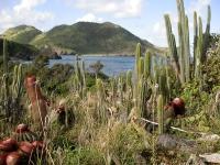 Cactus Place