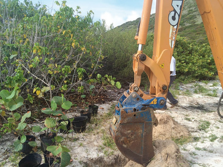 Plantings at Grandes Cayes