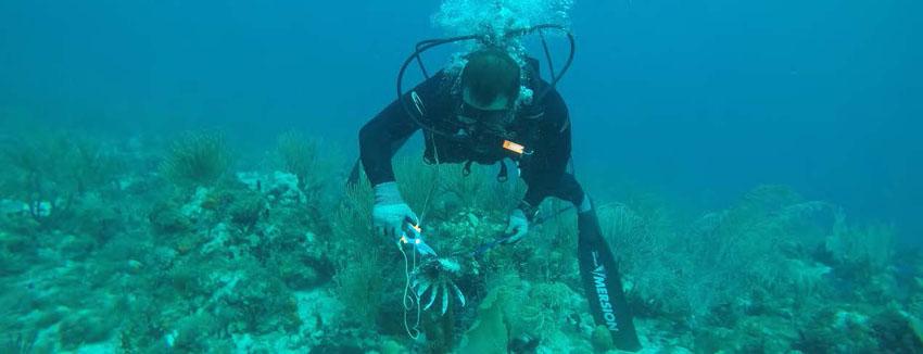 À la pêche au poisson-lion - Fishing lionfish
