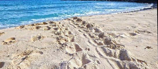 Trace laissée par une tortue marine   Trace left by a sea turtle