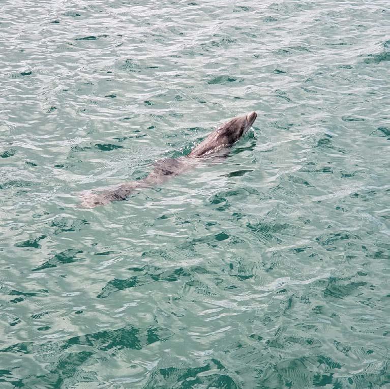Prise en charge d'un bébé dauphin en détresse