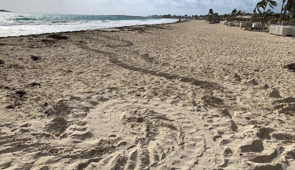 Traces de ponte sur la baie Orientale - Traces of egg-laying at Orient Bay
