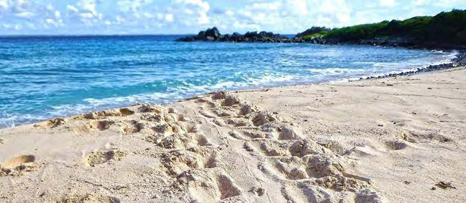 Trace d'une tortue venue pondre – Traces of a turtle to lay its eggs
