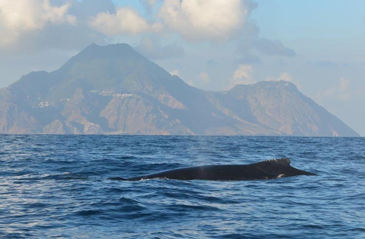 A humpback whale in front of Saba