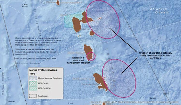 Les zones à risque pour les mammifères marins dans la Caraïbe
