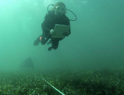 Le sentier sous-marin de Pinel - Underwater pathway in Pinel