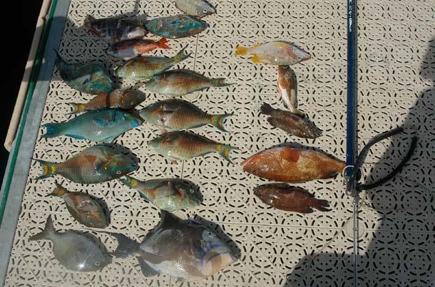 Poissons pêchés au fusil-harpon - Fish caught with a harpoon