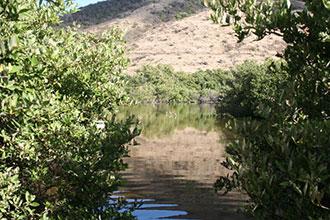 Point de vue sur la mangrove et les échasses d'Amérique © Conservatoire du littoral