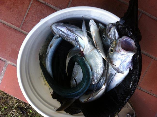 Les poissons ont été saisis | The fish were seized