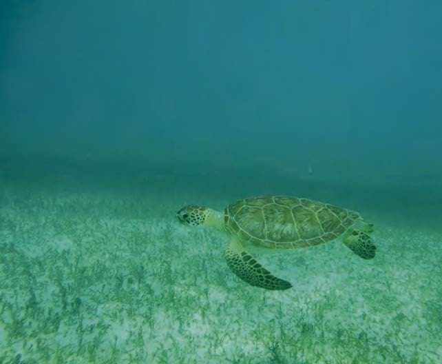 A sea turtle in his element