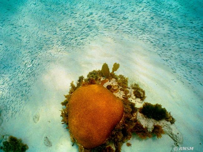Plongée Poissons Réserve Nationale Naturelle De Saint Martin