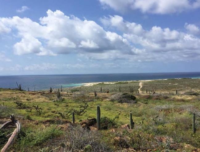 Vue sur le Marine Park d'Aruba - View of the Aruba Marine Park © Romain Renoux