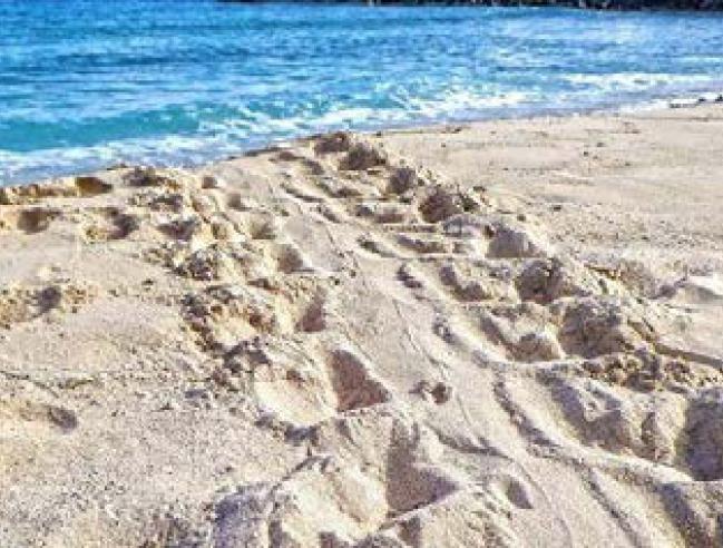 Trace laissée par une tortue marine | Trace left by a sea turtle