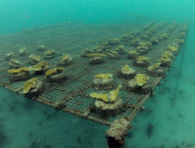 This coral nursery has been destroyed