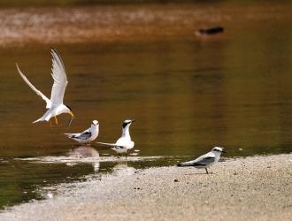 Rapport d'activité Réserve Naturelle Saint-Martin 2014