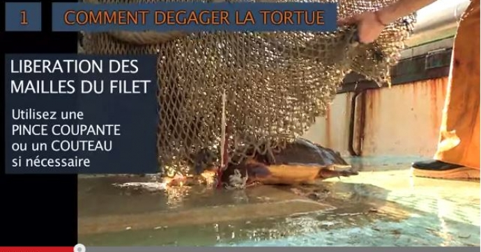 Protocole tortue capturée par engin de pêche