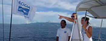 Whalewatching avec Agoa en Martinique © Laurent Juhel