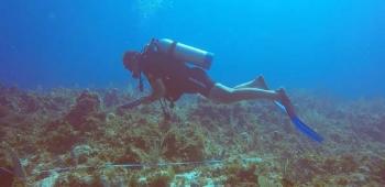 Suivi scientifique annuel des récifs et des herbiers Annual scientific study of reefs and sea grass beds