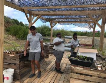 La pépinière de palétuviers - The mangrove nursery