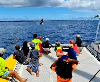 Observation de saut d'une baleine à bosse Observation of a humpback whale jumping