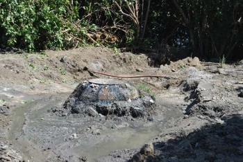 Déversement d'eaux usées dans l'étang de Grand-Case – Dumping of wastewater in Grand Case pond