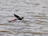 Wetland bird landing
