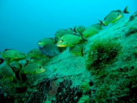 Grunt shoal